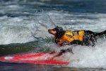 Пес-серфингист показал высший класс владения доской. Видео