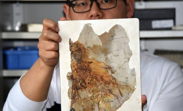 Археологи откопали загадочного крылатого монстра Юрского периода: совершенно новый вид