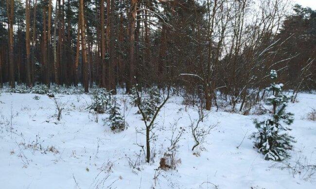 Зимний лес. Фото: скриншот YouTube