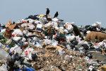Мухи, крысы и горы мусора: как выглядят пляжи популярного украинского курорта. Фото