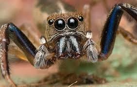 Археологи нашли пауков со светящимися глазами. Их возраст - 10 миллионов лет