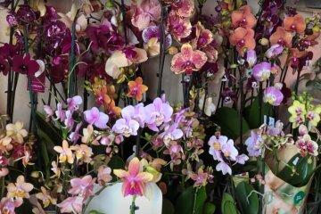 Орхидеи. Фото: скриншот YouTube-видео