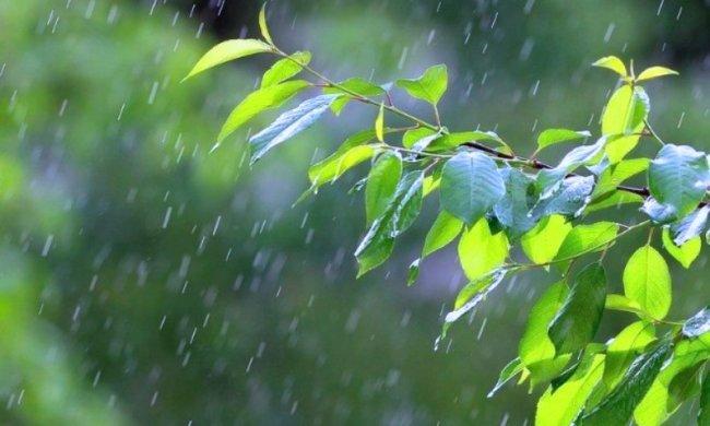 Дождь. Фото: GISMETEO