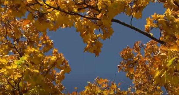 Погода в Украине 24 октября. Фото: скриншот YouTube-видео
