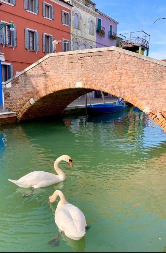 Венеция. Фото: скриншот Twitter