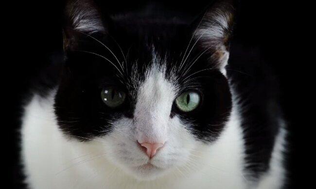 Котик. Фото: YouTube, скрин