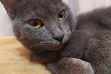 Кот. Фото: Стена