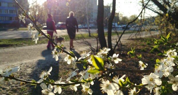 Весна медленно врывается в Киев: прогноз погоды на 24 апреля