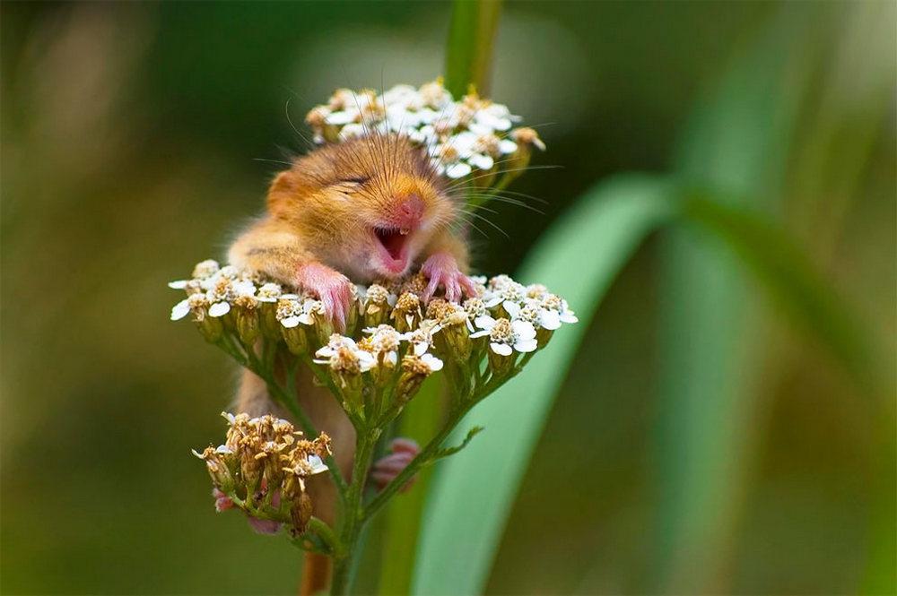 Картинки с забавные животные с цветами